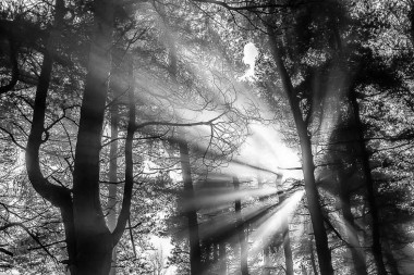 Black-and-white-sun rays