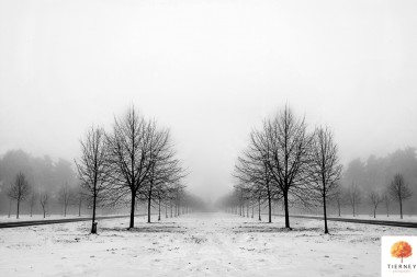 Black-and-white-symmetry in the mist